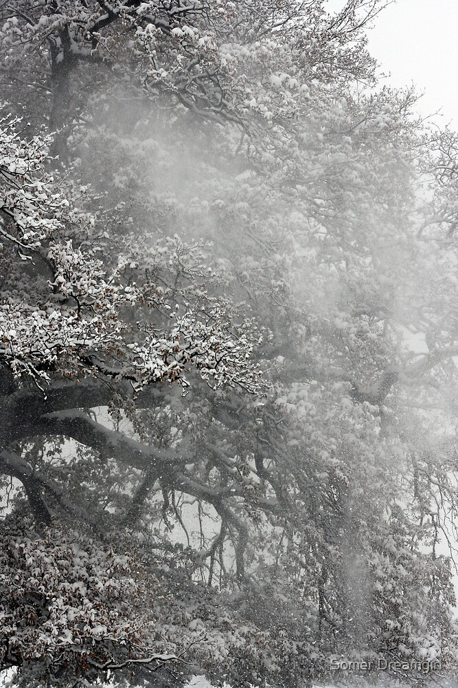 Trees and Snow, Petworth Park. by Emma S