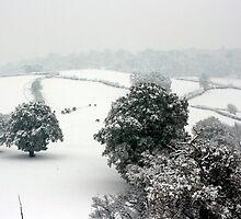Snowy Rolling Fields, Petworth. by Emma Turner
