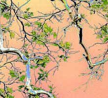 Spring Maple by jaeepathak