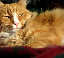 Bayer The Fluffy Cat by angbet31