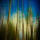 Palms Blur by Anne  McGinn