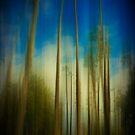 Palms Blur by Anne  McGinn