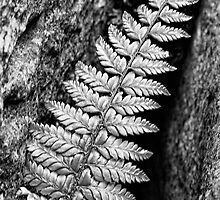 Fern in Gryke by Simon Lupton