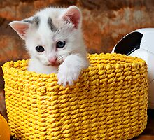 Kitten in yellow basket by Garry Gay