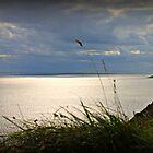 The Gower Sunset, Swansea by Matt Ware