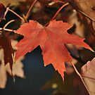 October Glory by Doyle  McClung