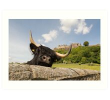 Highland cow in front of Stirling Castle, Scotland Art Print