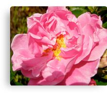 Governor General's rose 10 Canvas Print