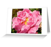 Governor General's rose 10 Greeting Card