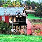 After the Harvest  by Marcia Rubin