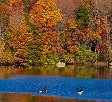Natures Colorful Autumn  by Karol Livote