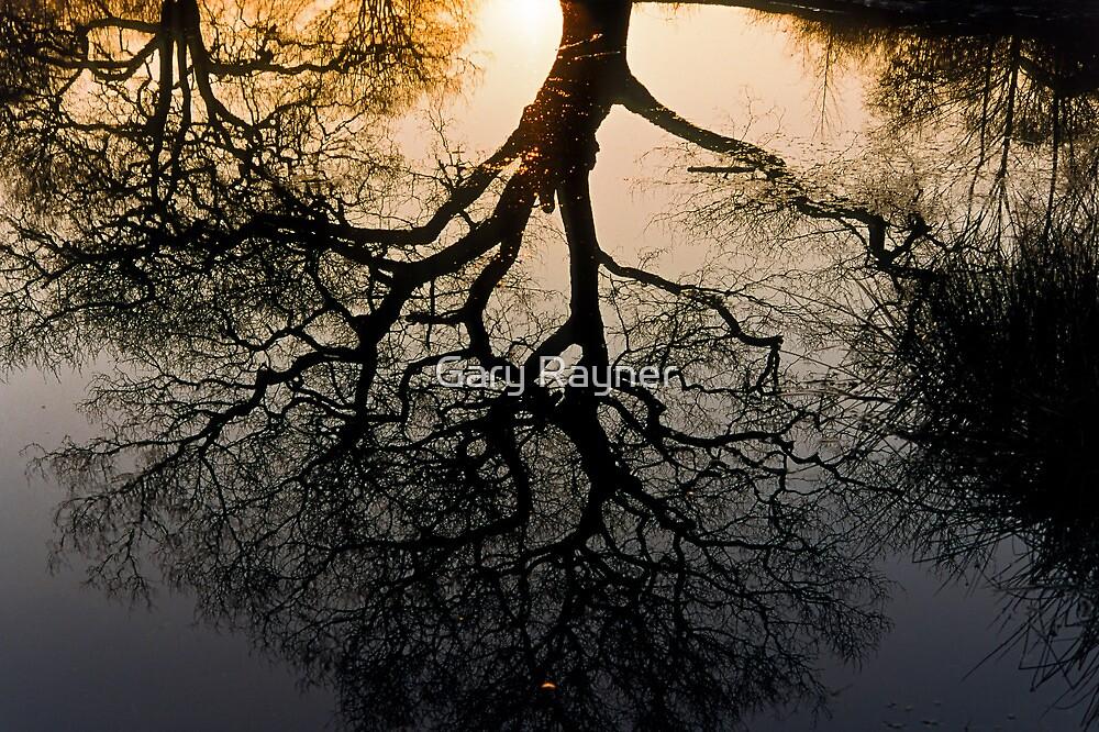 Tree reflection by Gary Rayner