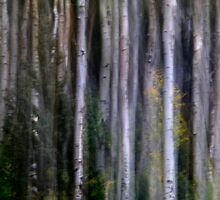 Fall Aspens #1 by klindsey