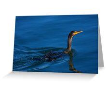 Juvenile Cormorant Swim Greeting Card