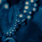 Octopus in sepia and cyan by jeliza