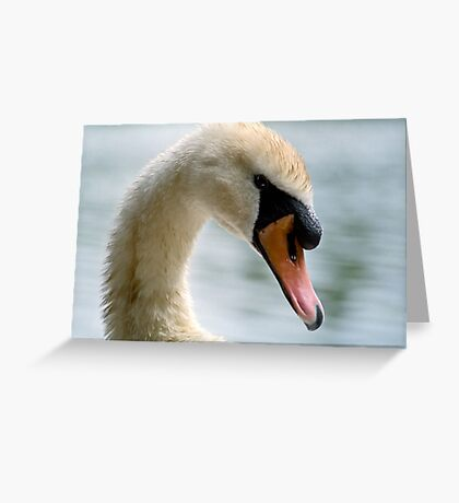Portrait of an adult Mute Swan Greeting Card