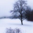 Winter  by Tammy Wetzel