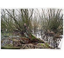 Forest swamp Poster