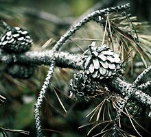 Pine cones by Jen Wahl