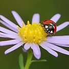 purple and ladybug by davvi