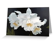 Gorgeous White Orchids Greeting Card