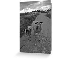 Babysitter Sheep Greeting Card