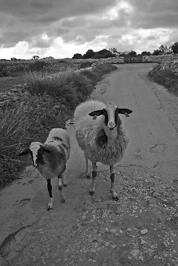 Babysitter Sheep by mariocassar