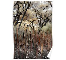 Cattails and Cottonwoods Poster