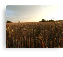 Evening countryside Canvas Print
