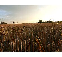 Evening countryside Photographic Print
