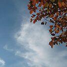 Hopeful Skies by Quinn Blackburn