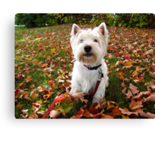 October 22, 2011 - Happy 2nd Birthday Brody or Roof, Roof! Canvas Print