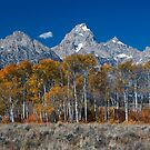 Fall in the Grand Tetons by Rick Louie