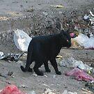 Black Tiger by taimordar