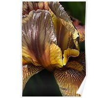 Spring - Iris Poster