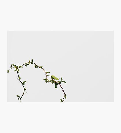 Spring Willow Photographic Print