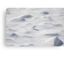 White ptarmigan Canvas Print