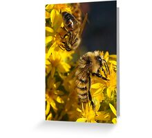 GATHERING NECTAR Greeting Card