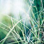 Beautiful weeds by ╰⊰✿Sue✿⊱╮ Nueckel