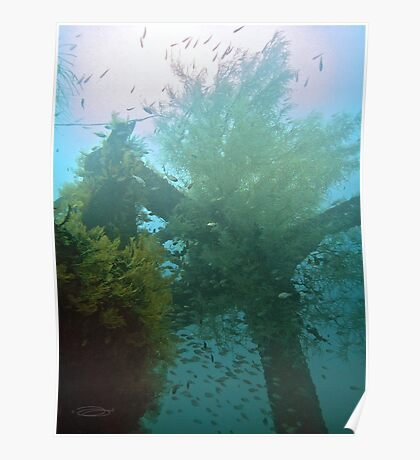 UNDERWATER ROUTE 77 ~ CEMENT WRECK Poster