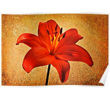 Orange Asiatic Lily #2 Poster