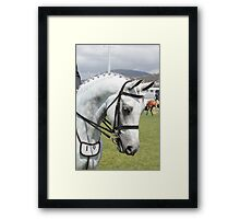 Pretty Face - Royal Hobart Show Tasmania 2011 Framed Print