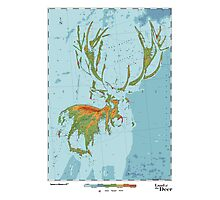 Cervidae - Land of the Deer Photographic Print