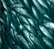Blue Fish by Phil  Crean