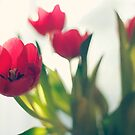 Red tulips by Sangeeta