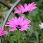 Flower by Glenn  Cramsie