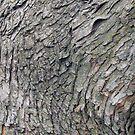 Bark by Donald Salsbury