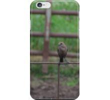 Bird on Fence iPhone Case/Skin