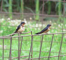 Birds on Fence by Donald Salsbury