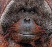 Orangutan v1 Sticker